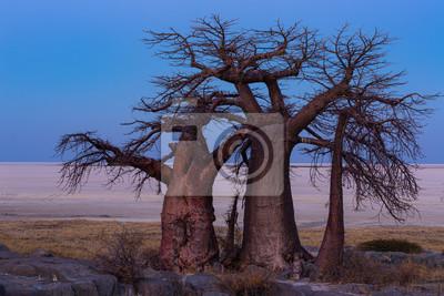Three baobab trees on the edge of the pan