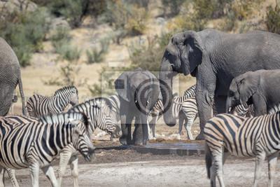 Tiere Trinkwasser in einem Wasserloch im Etosha Nationalpark, Namibia, Afrika