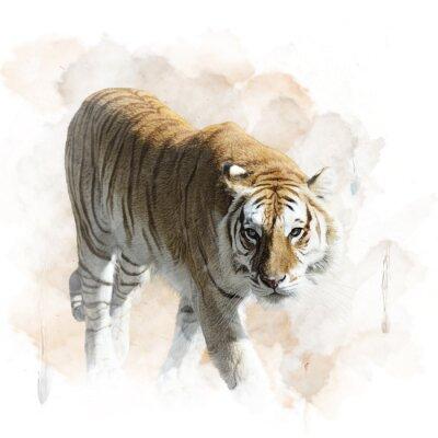 Poster Tiger,