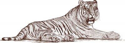 Poster Tiger liegend