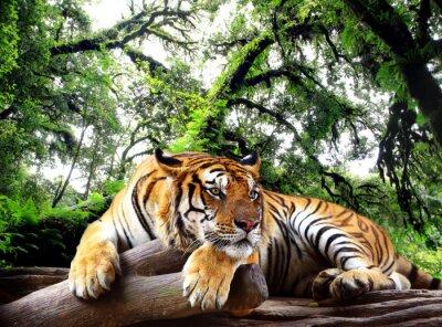 Poster Tiger suchen etwas auf dem Felsen in tropischen immergrünen Wald