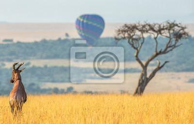 Topi antelope standing in the savanna in the background of a flying balloon. Africa. Kenya. Tanzania. Masai Mara. Serengeti.