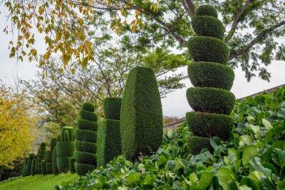 topiary baum gartenbau spirale schnitt thuja fichte kiefer. Black Bedroom Furniture Sets. Home Design Ideas