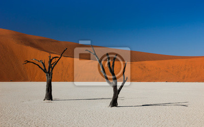 Poster Tote Bäume und Dünen in Deadvlei, Namibia