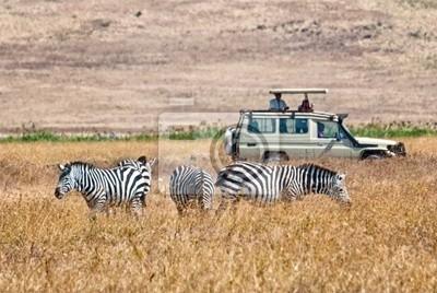 Touristen wathing Zebras Essen