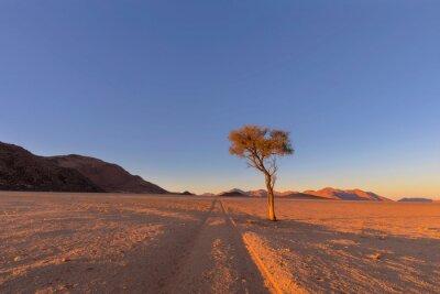 Tracks on dry sand in the desert