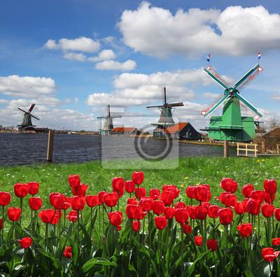 Traditionelle holländische Windmühlen mit roten Tulpen, Amsterdam, Holland
