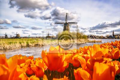 Traditionelle niederländische Windmühle mit Tulpen in Zaanse Schans, Amsterdam Gebiet, Holland