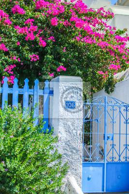 Traditionelles Haus und Blumenwand von Bougainvillea in Fira die