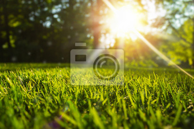 Poster Tranquil fresh grass for growth and water concept mother nature.  Copy space for text.