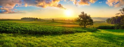 Poster Tranquil panoramic rural landscape scenery in an early summer morning after sunrise, with a tree on green meadows and colorful clouds in the gold and blue sky