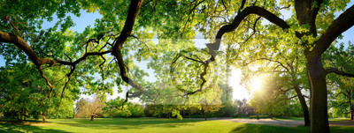 Poster Tranquil panoramic scenery in a beautiful park