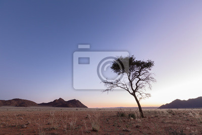 Tree in the NamibiRand reserve, Namibia.