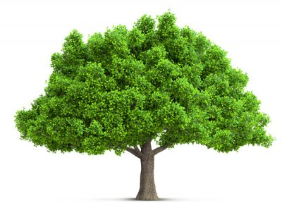 Poster tree isolated 3D illustration