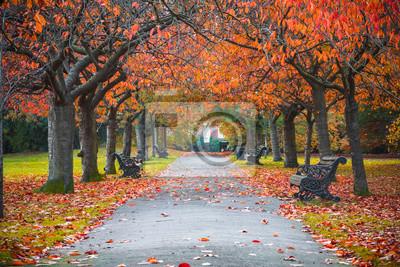 Poster Tree lined autumn scene in Greenwich park, London