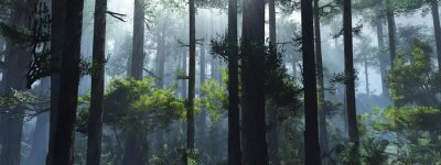 Poster Trees in the fog. The smoke in the forest in the morning. A misty morning among the trees. 3D rendering