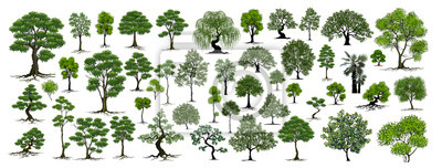 Poster Trees Isolated on White Background