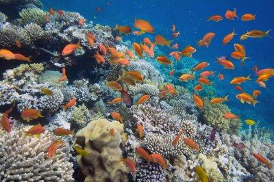 Poster Tropische Fische am Korallenriff
