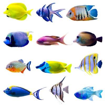 Poster Tropische Fische Sammlung