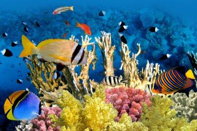 Poster Tropische Fische und Korallenriff