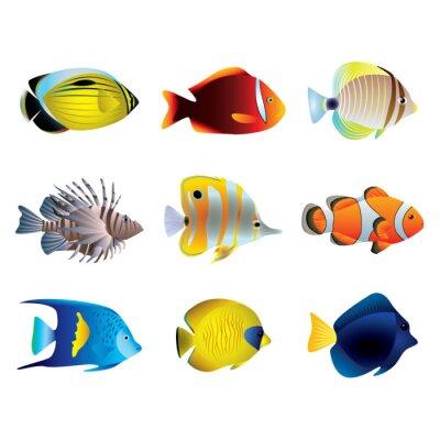 Poster Tropische Fische Vektor-Set