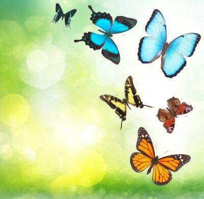 Poster Tropische Schmetterlinge im Garten