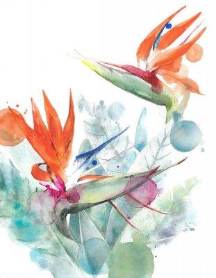 Poster Tropischer Blumenvogel der Paradies Strelitzia-Aquarellmalereiillustration lokalisiert auf weißem Hintergrund