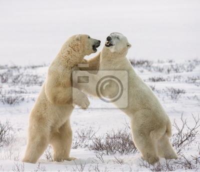 Two white bear hug. An excellent illustration.