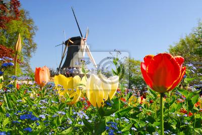 Poster typisch holländischen : Mühle und Tulpen im Keukenhof Holland