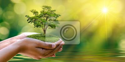 Poster Umwelt Tag der Erde In den Händen von Bäumen, die Setzlinge wachsen. Bokeh grünen Hintergrund Weibliche Hand hält Baum auf Natur Feld Gras Forest Conservation Konzept
