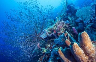 Poster Unterwasser-Korallenriff