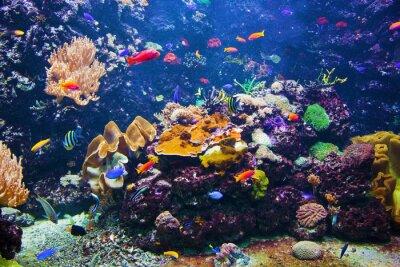 Poster Unterwasser-Szene mit Fisch, Korallenriff