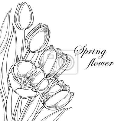 Vector blumenstrauß mit umrisse tulpen blumen isoliert auf weiß ...