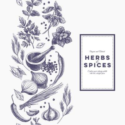 Poster Vector Hintergrund mit Hand gezeichneten Kräutern und Gewürzen.