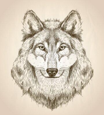 Poster Vector Skizze Darstellung eines Wolf-Kopf-Vorderansicht.