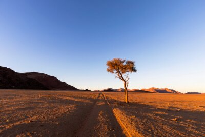 Vehicle tracks in the desert and lone camel thorn tree