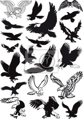 Vektor Adler Sammlung