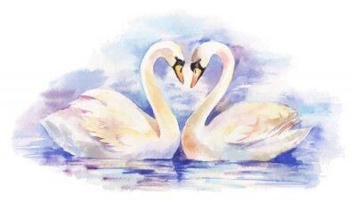 Poster Vektor Aquarell Illustration von paar weiße Schwäne