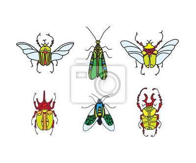 Vektor Farbe Kafer Wandposter Poster Entomologe Kuchenschabe