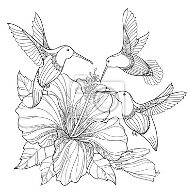 Vektor Fliegen Kolibri Oder Colibri Und Verzieren Hibiskus In
