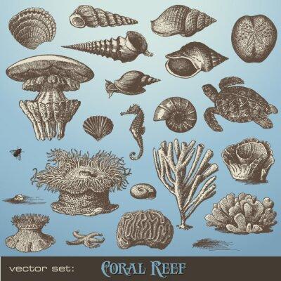 Poster Vektor-Set: Korallenriff - Vielfalt der Meeres Design-Elemente