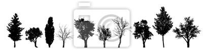 Poster Vektorschattenbild des Baums auf weißem Hintergrund.