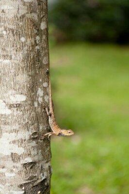Poster Veränderbare Eidechse auf Baumstamm