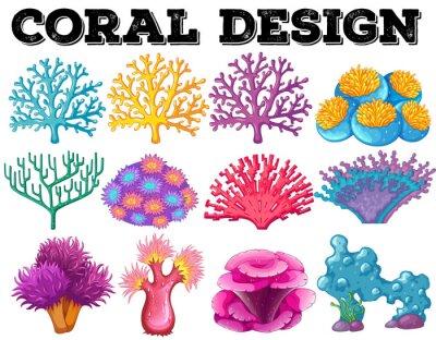 Poster Verschiedene Art von Korallen-Design