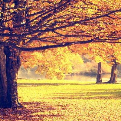 Poster Verschwommen Herbst-Szene