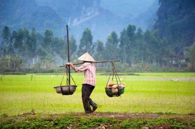 Poster Vietnamesischer Bauer auf Reisfeld in Ninh Binh, Tam Coc. Ökologischer Landbau in Asien