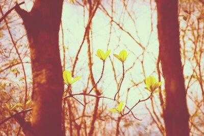 Poster Vintage forest