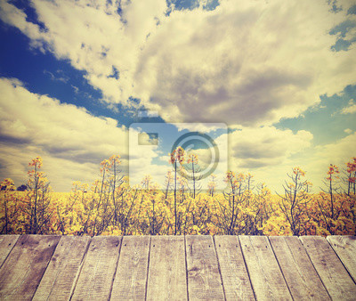 Poster Vintage toned summer background with rape field.