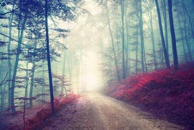 Poster Vintages magisches Waldweg