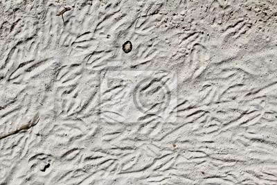 Vogel Fußspuren im Sand Hintergrund / Textur